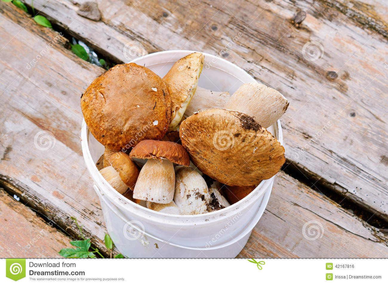 Image Gallery Mushrooms Cepes