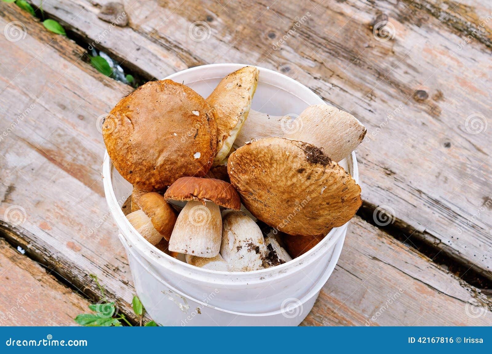Image Gallery Mushrooms Cepes