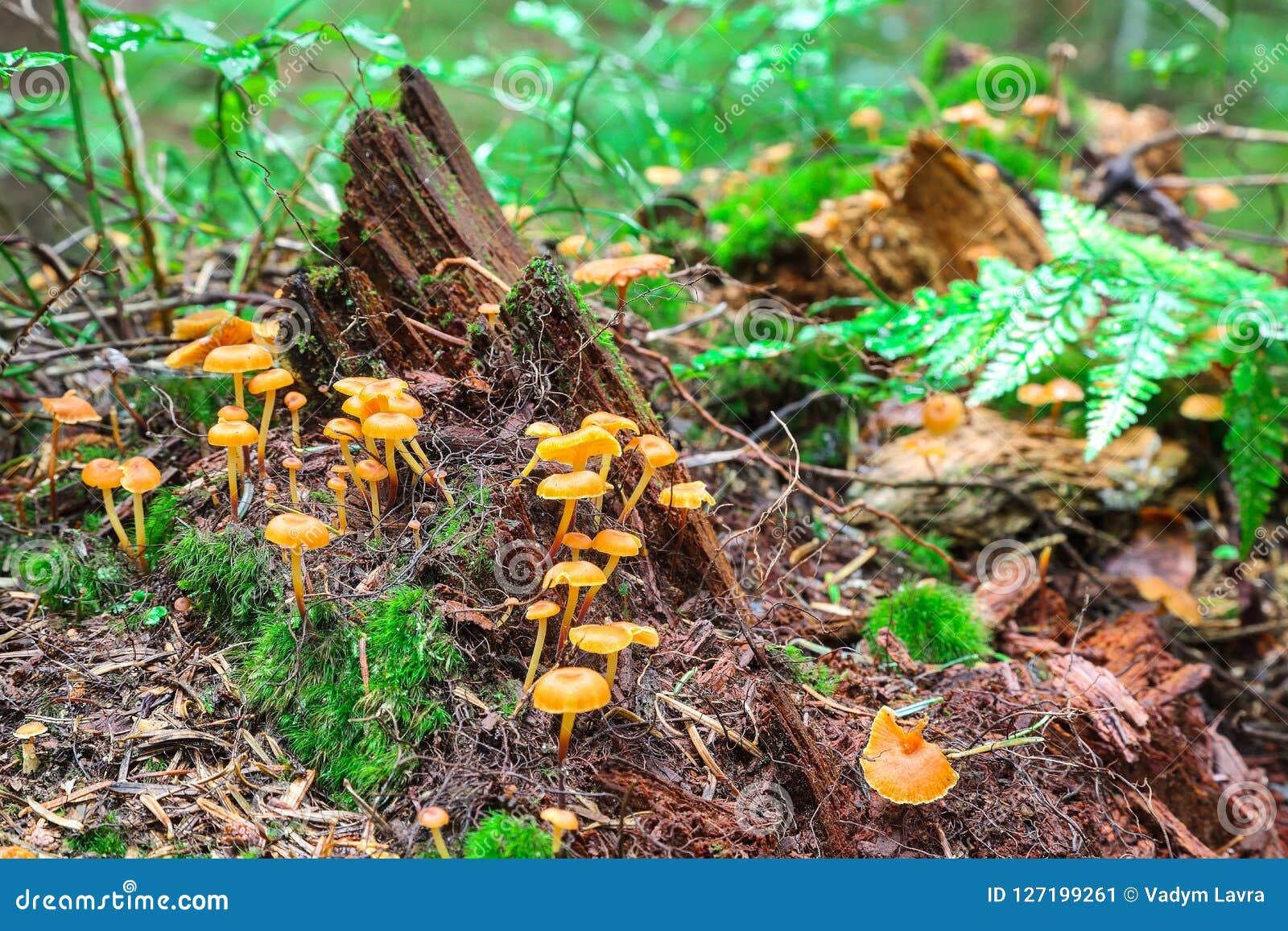 Mushrooms of the Crimea. Mushrooms of Crimea edible: description, photo