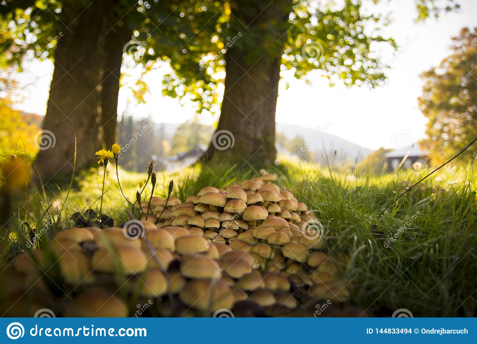 Small mushrooms growing next to trees and grass