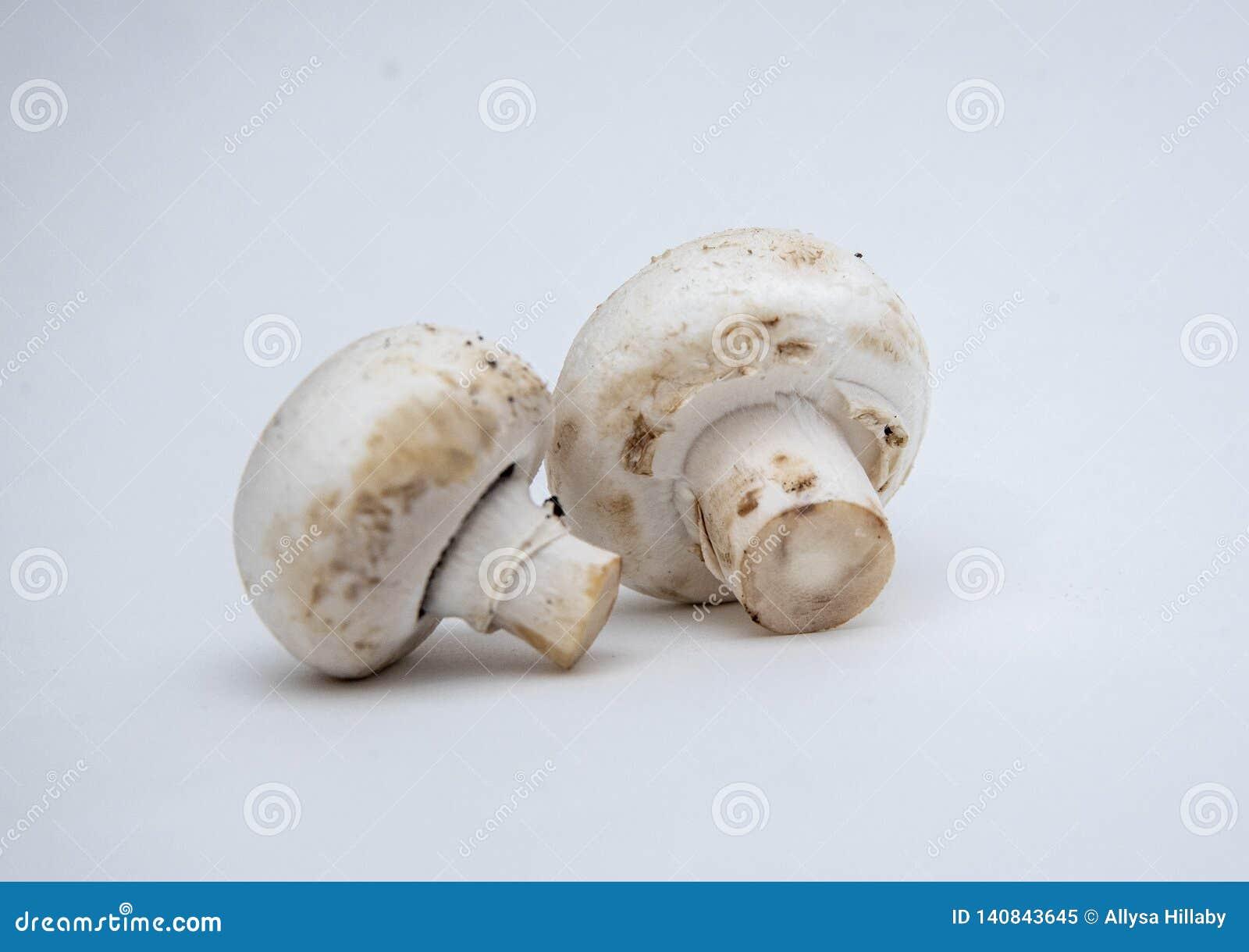 Mushrooms white backdrop