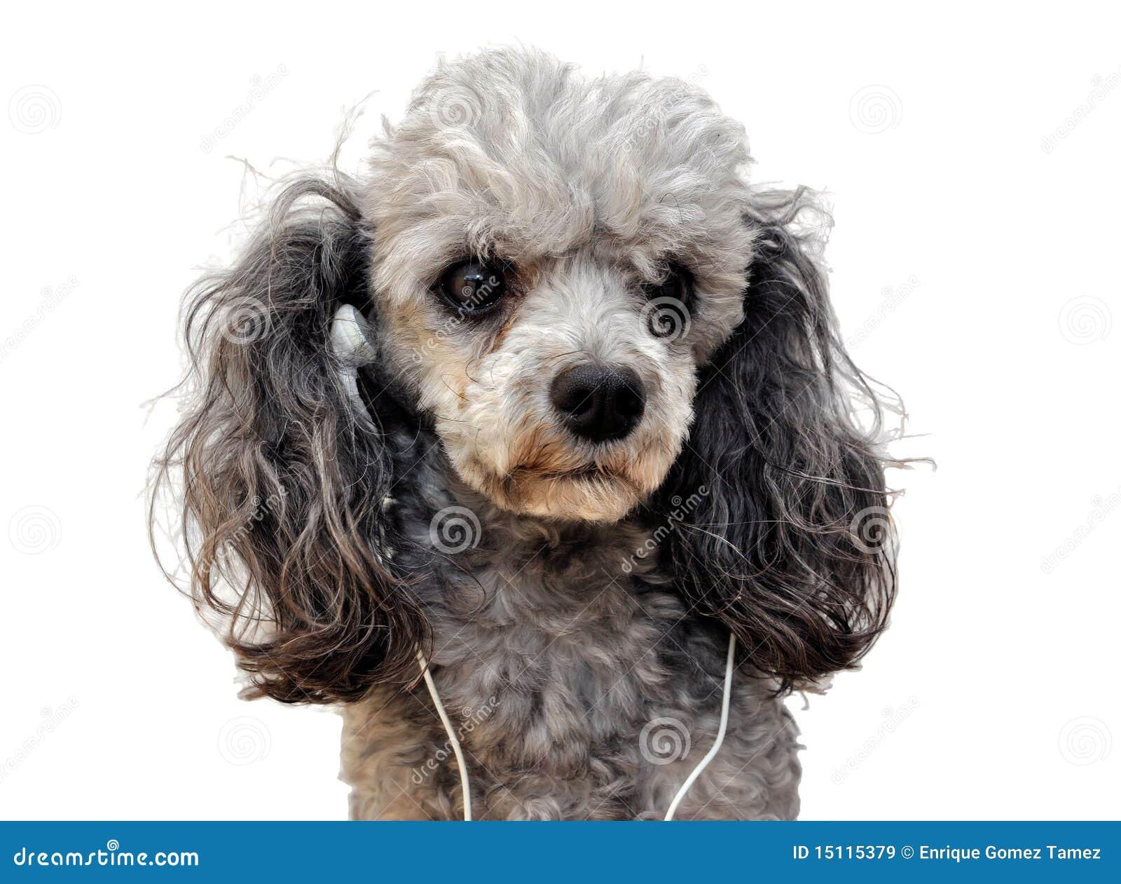 Music dog
