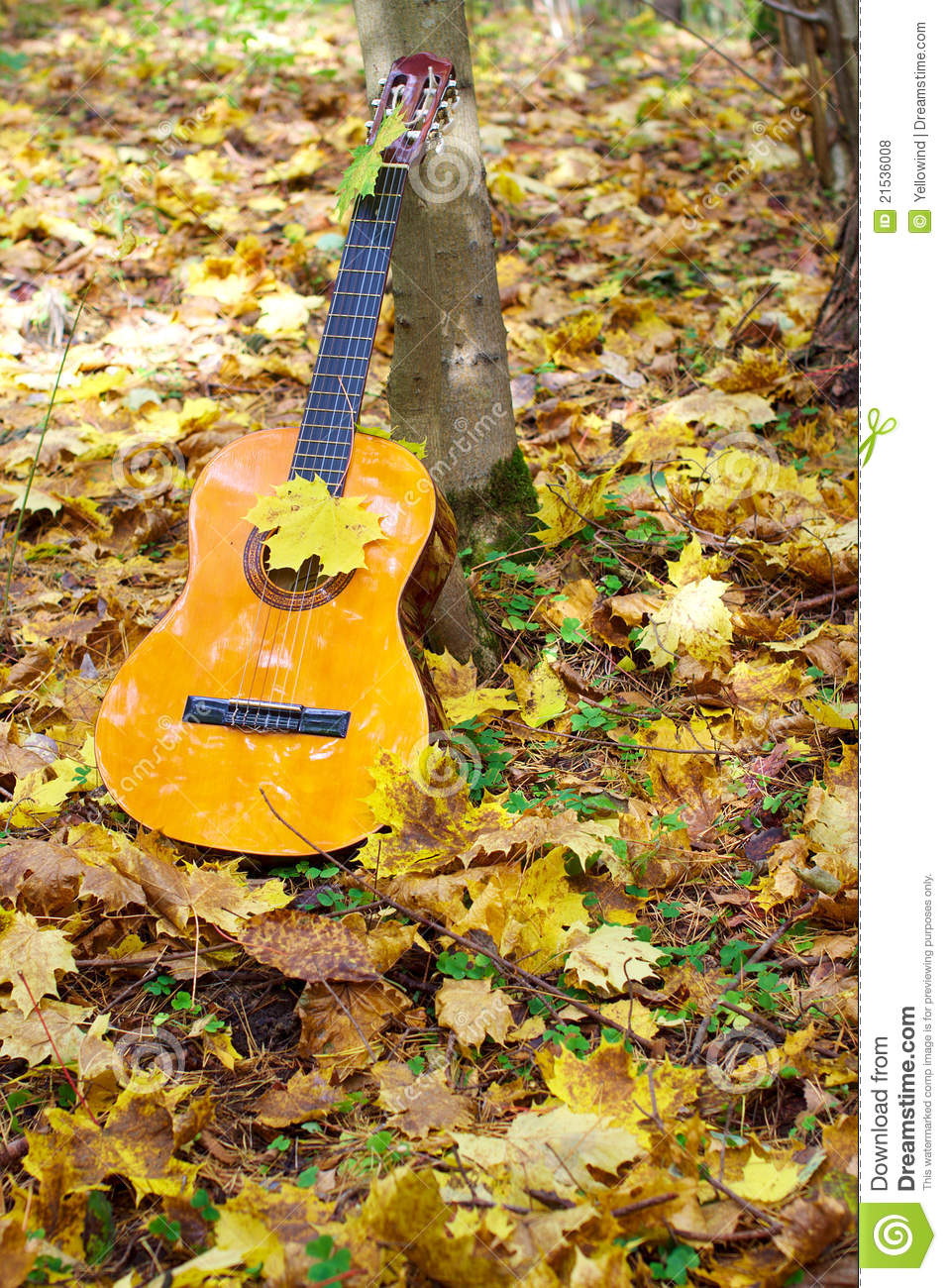 Free Stock Photo: Music Guitar In Autumn Leaves Forest Background Stock