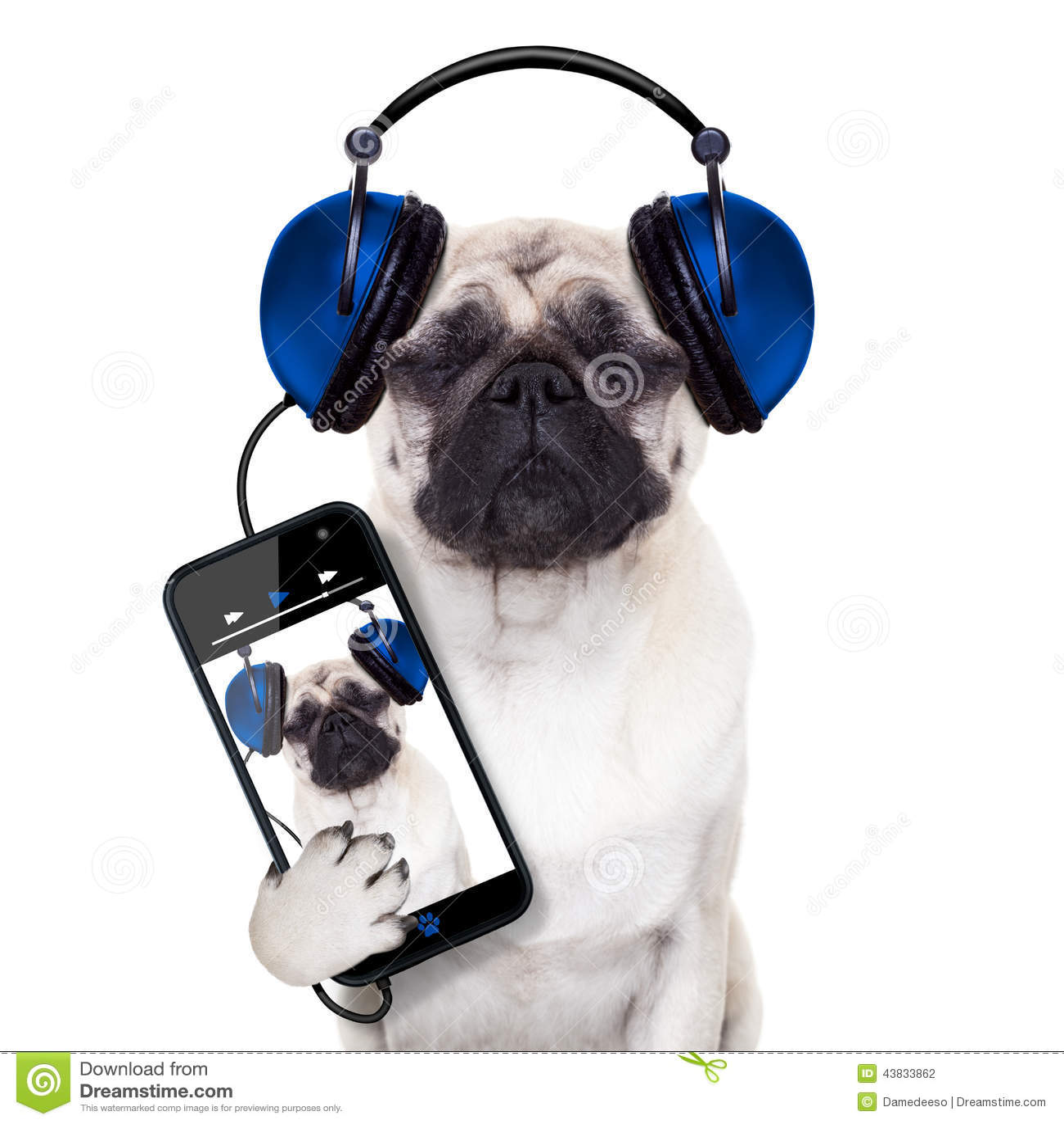 Musica del cane