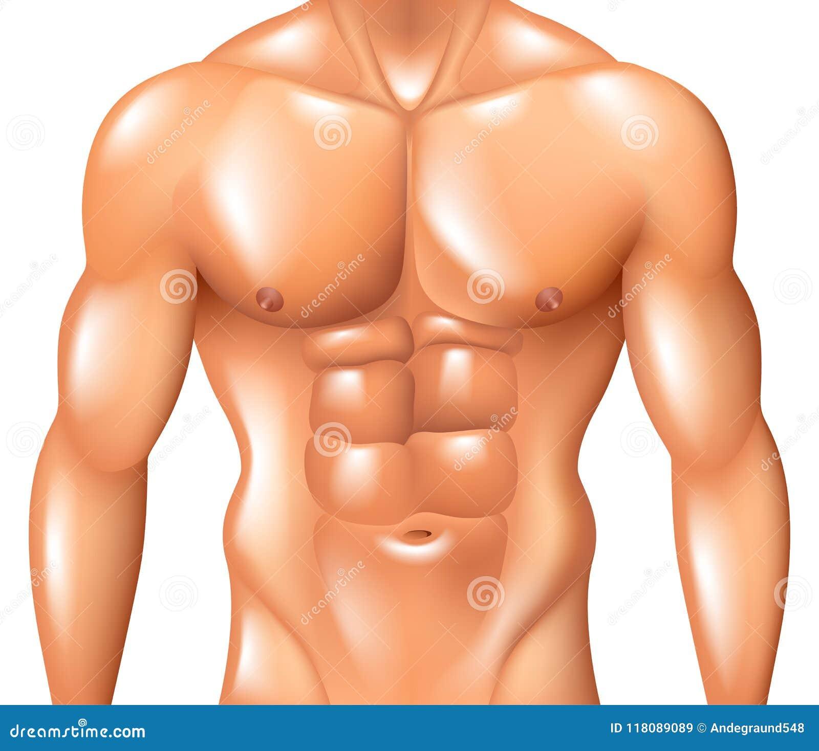 Muskulöses Manntorso-Eignungskonzept lokalisiert auf weißem Vektor
