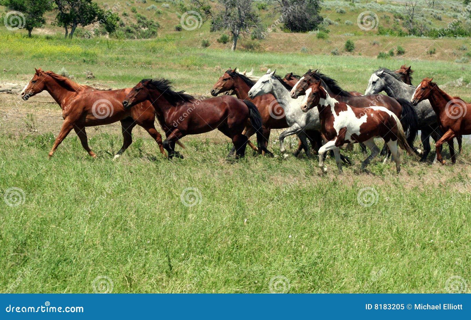 Mustang em Prarie