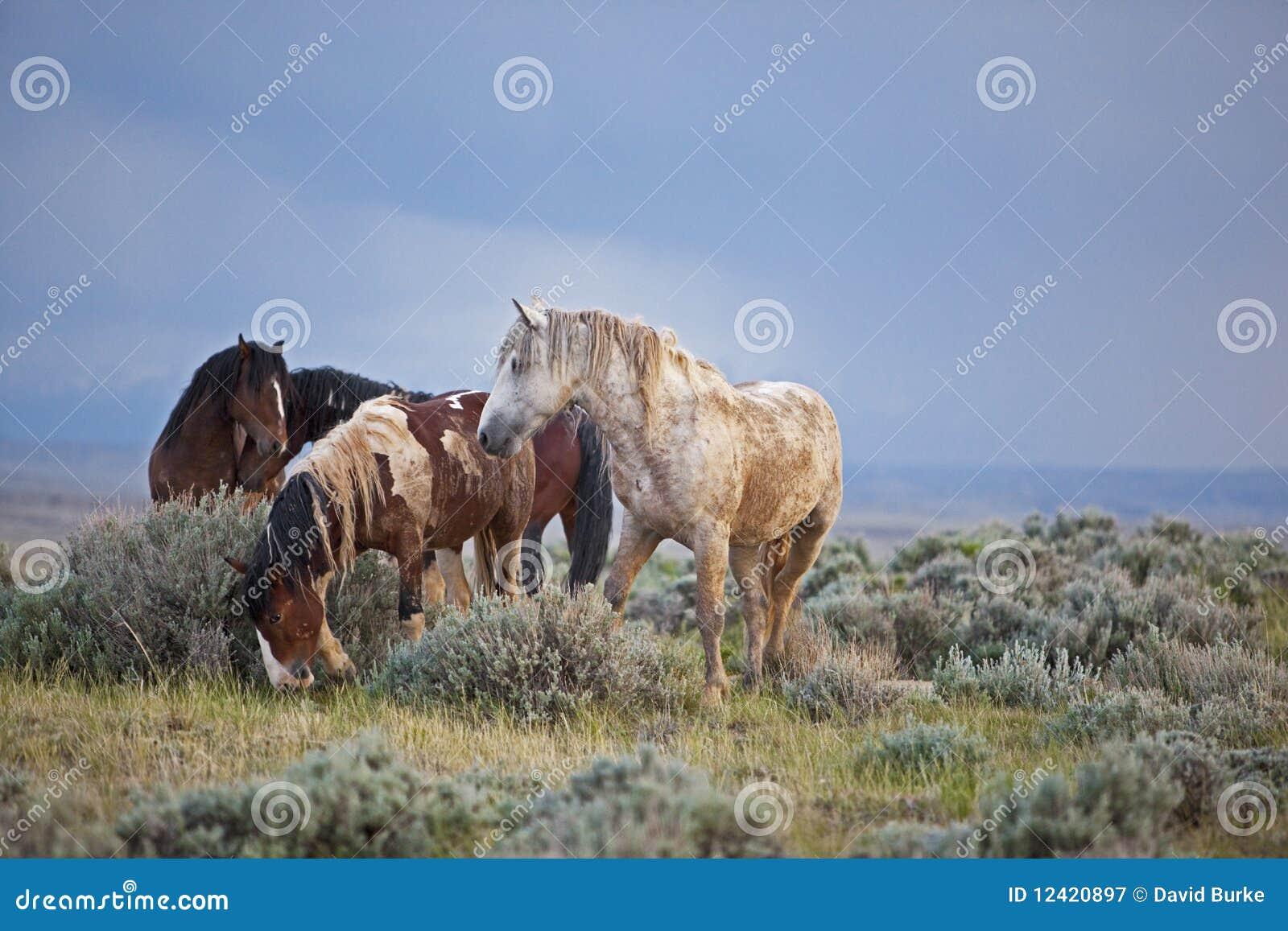 Mustangos después de la lluvia