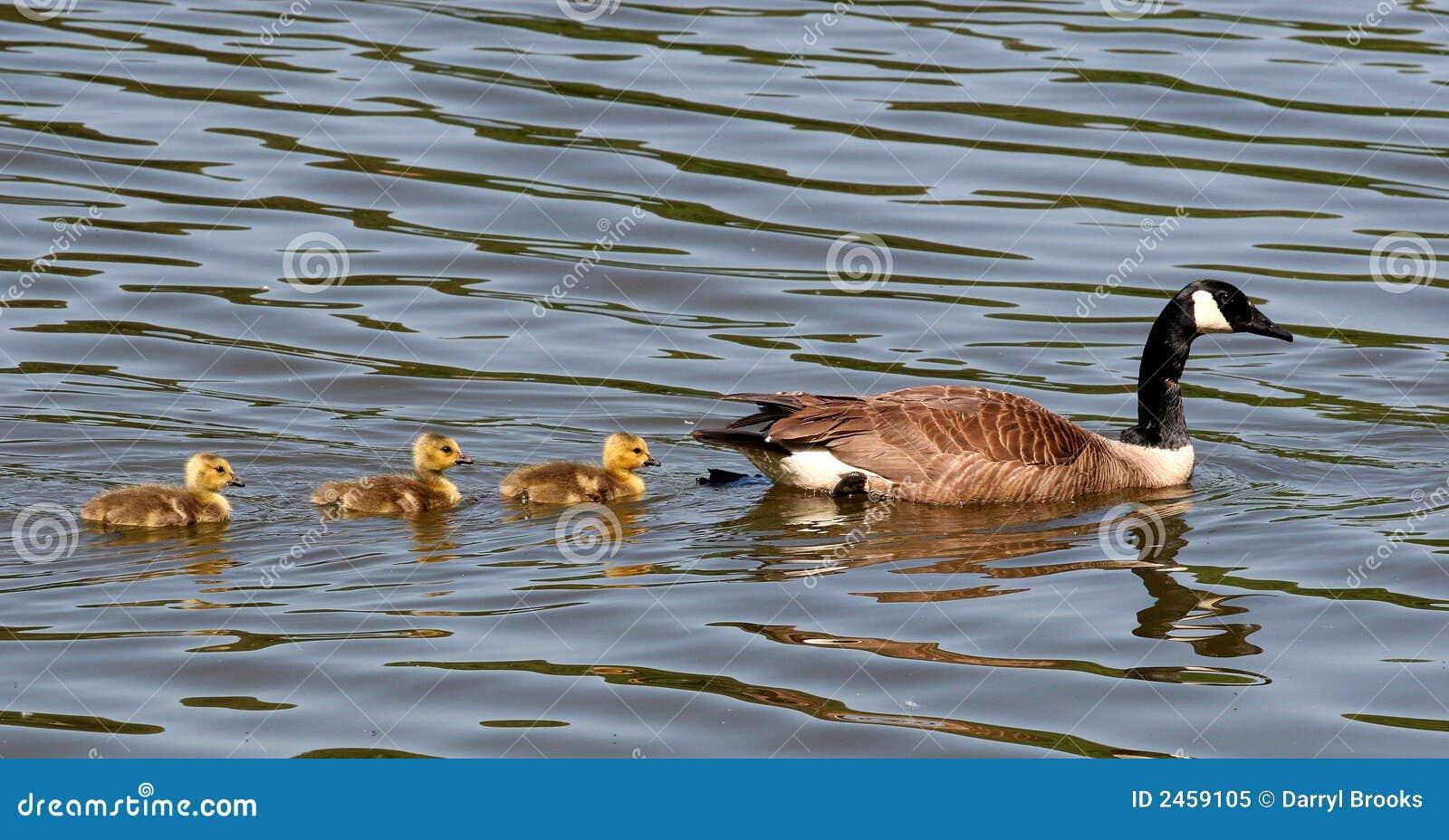 Mutter und drei Schätzchen