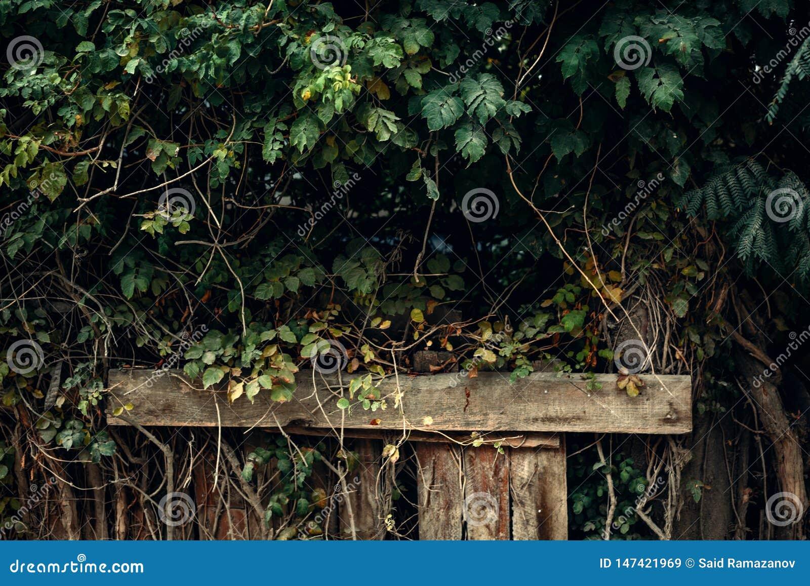 Muur van groene bladeren tegen de achtergrond van houten pijlers