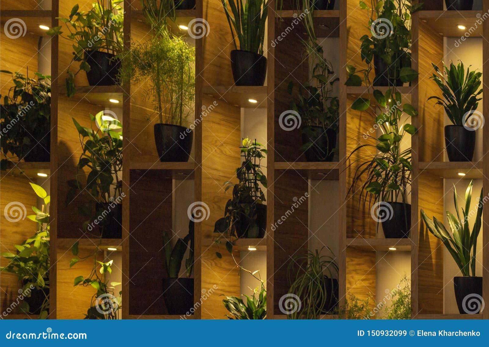Muur van planken met bloemen in pot backlit van lampen Binnenlands
