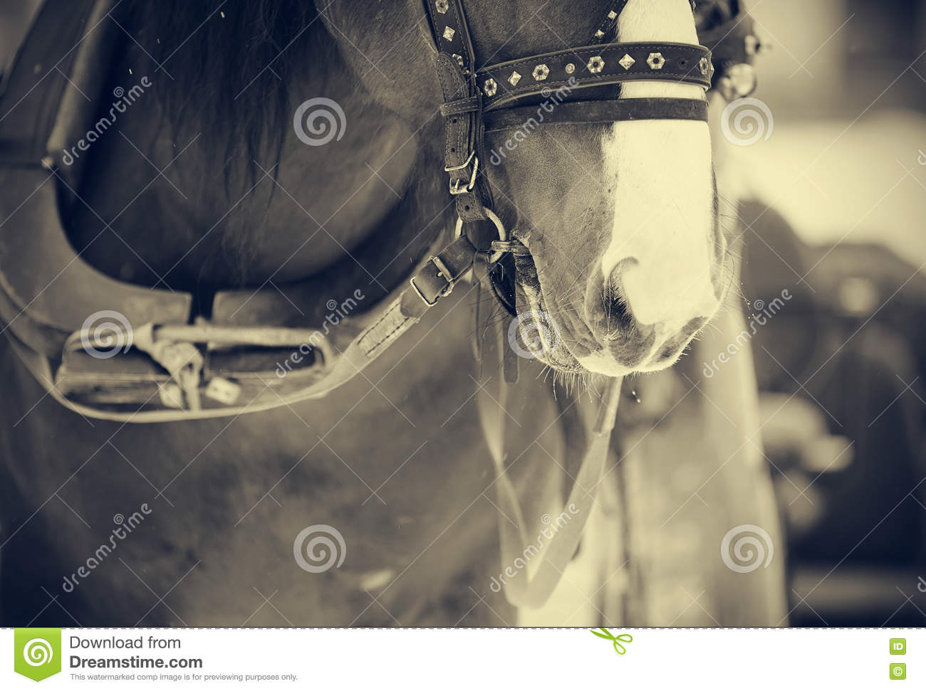 Muzzle is draught horse harnessed to a sled.