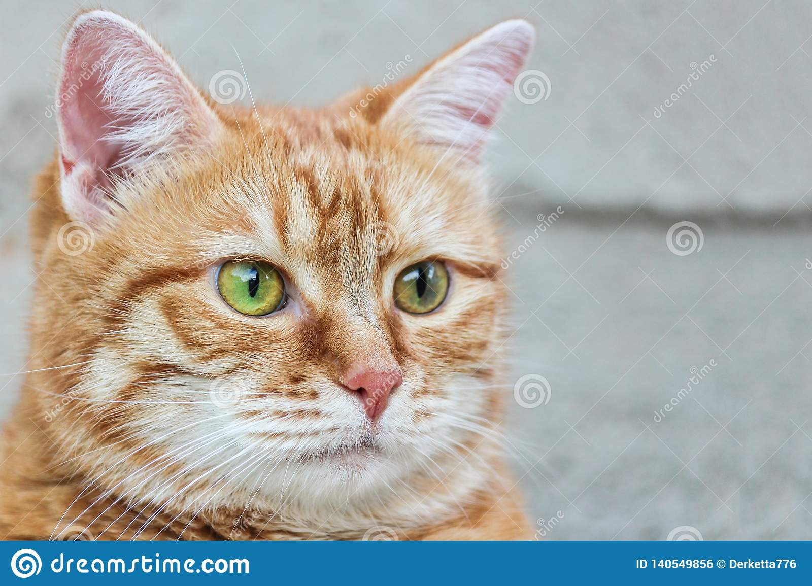 Muzzle red cat with watchful green eyes staring. Close up. Selective focus