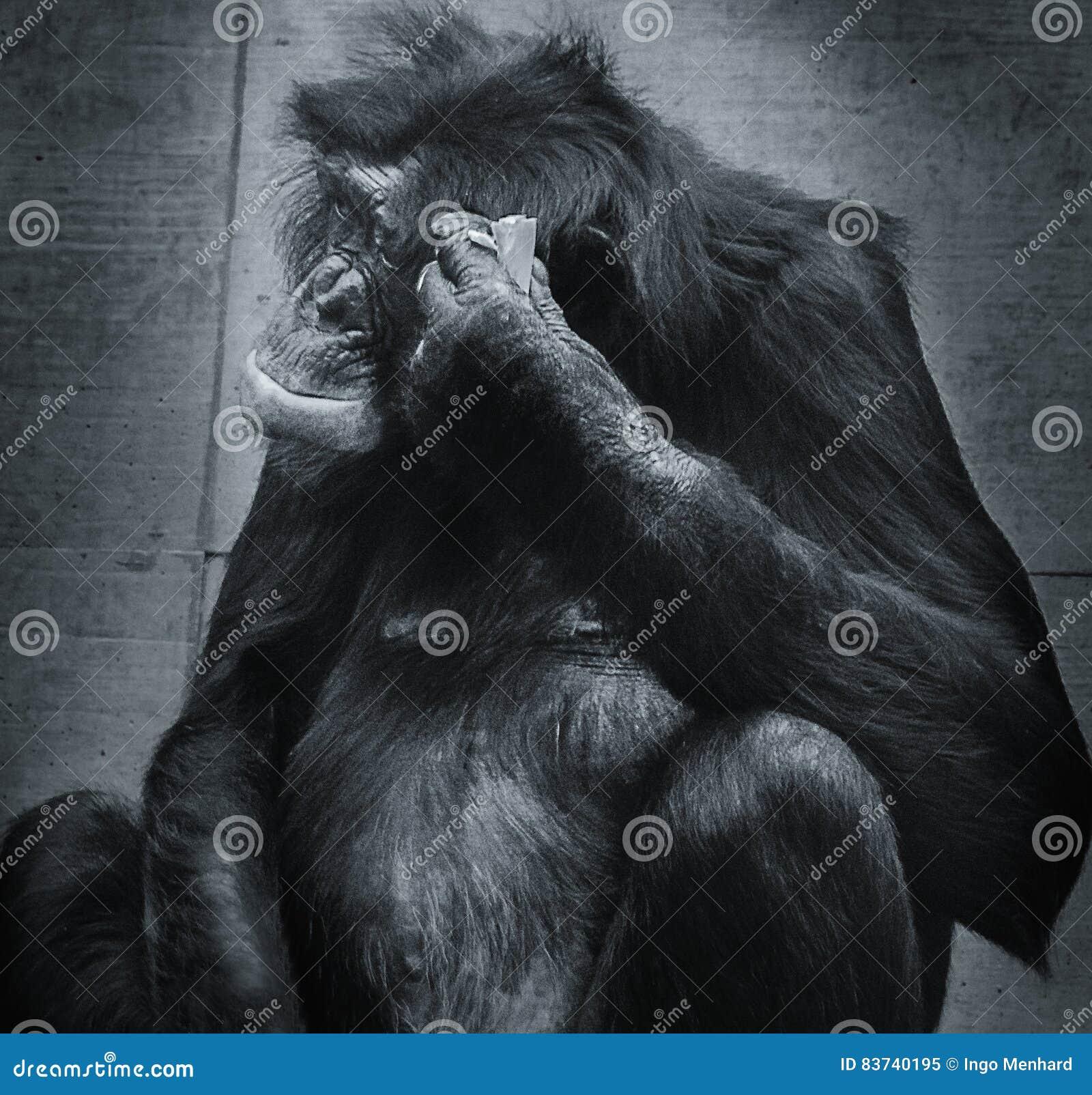 Myśląca małpa
