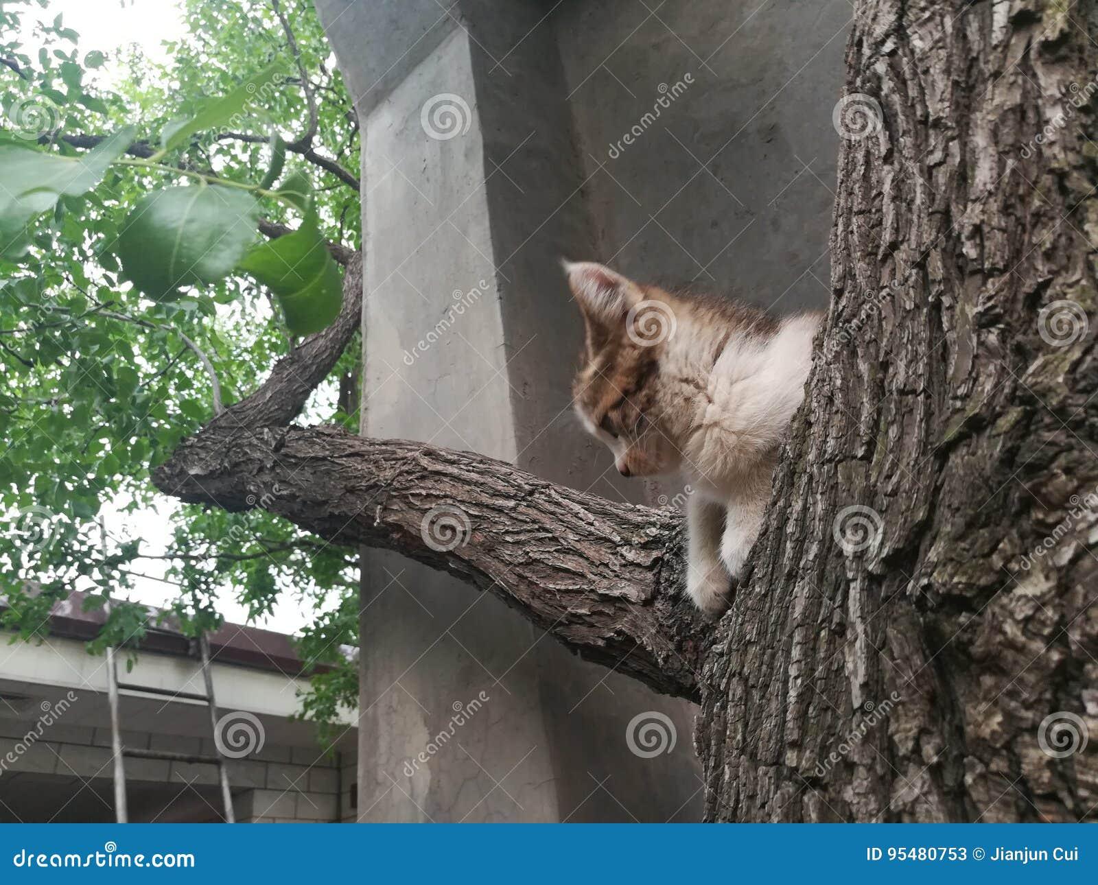 Myślący kot