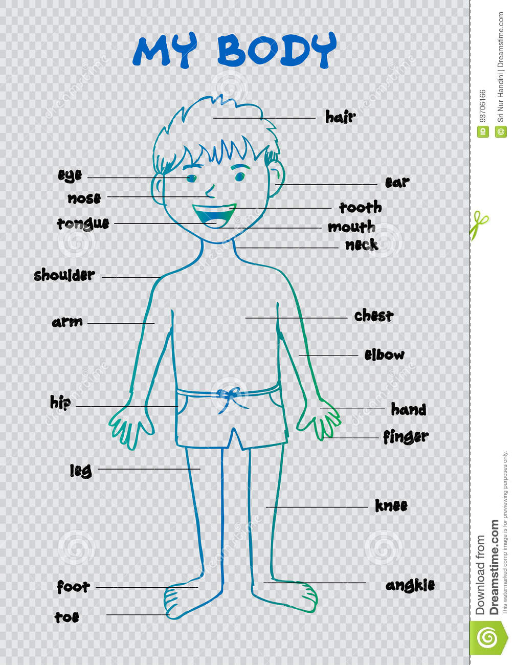 My Body   Educational Info Graphic Chart For Kids Stock