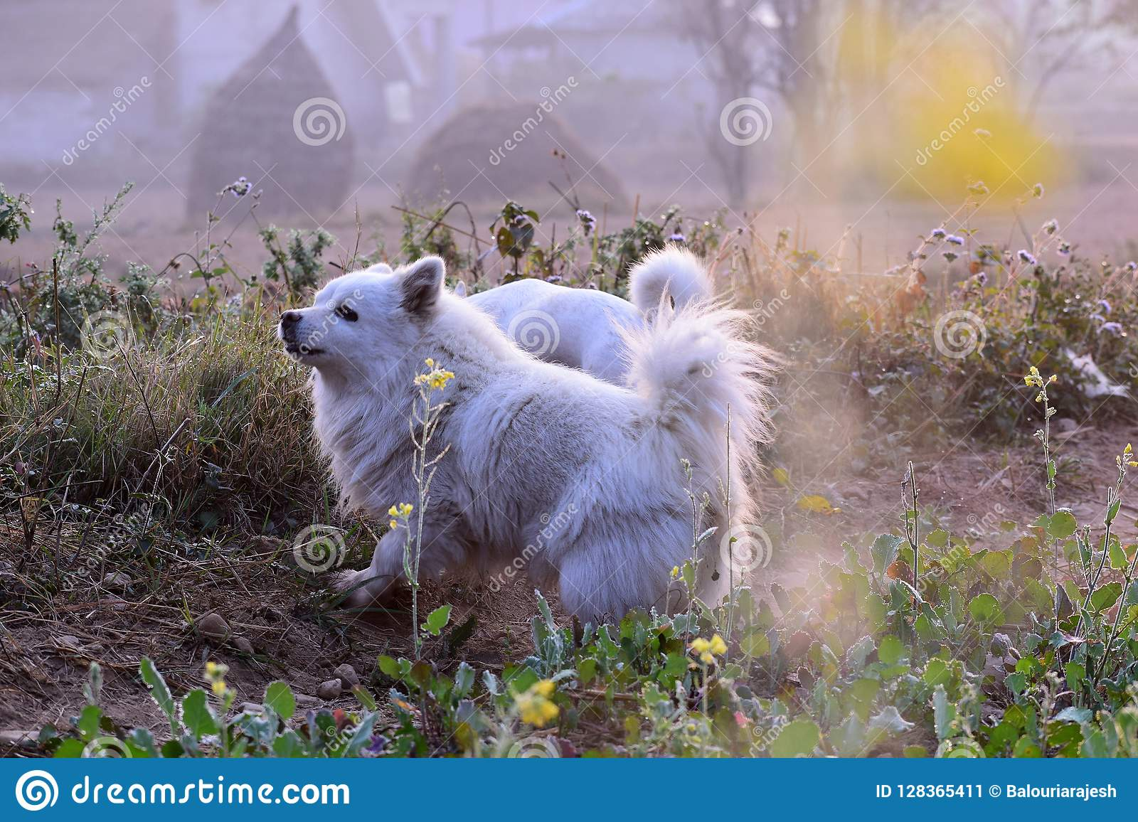 My Little Dog A Heartbeat At My Feet Stock Image Image Of Love