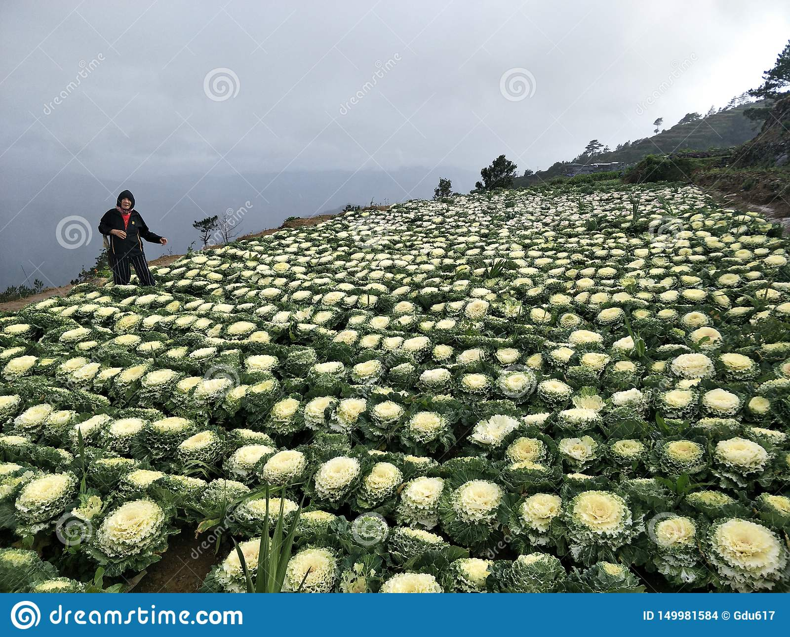 My Mother at Cauliflower Flowers from Benguet