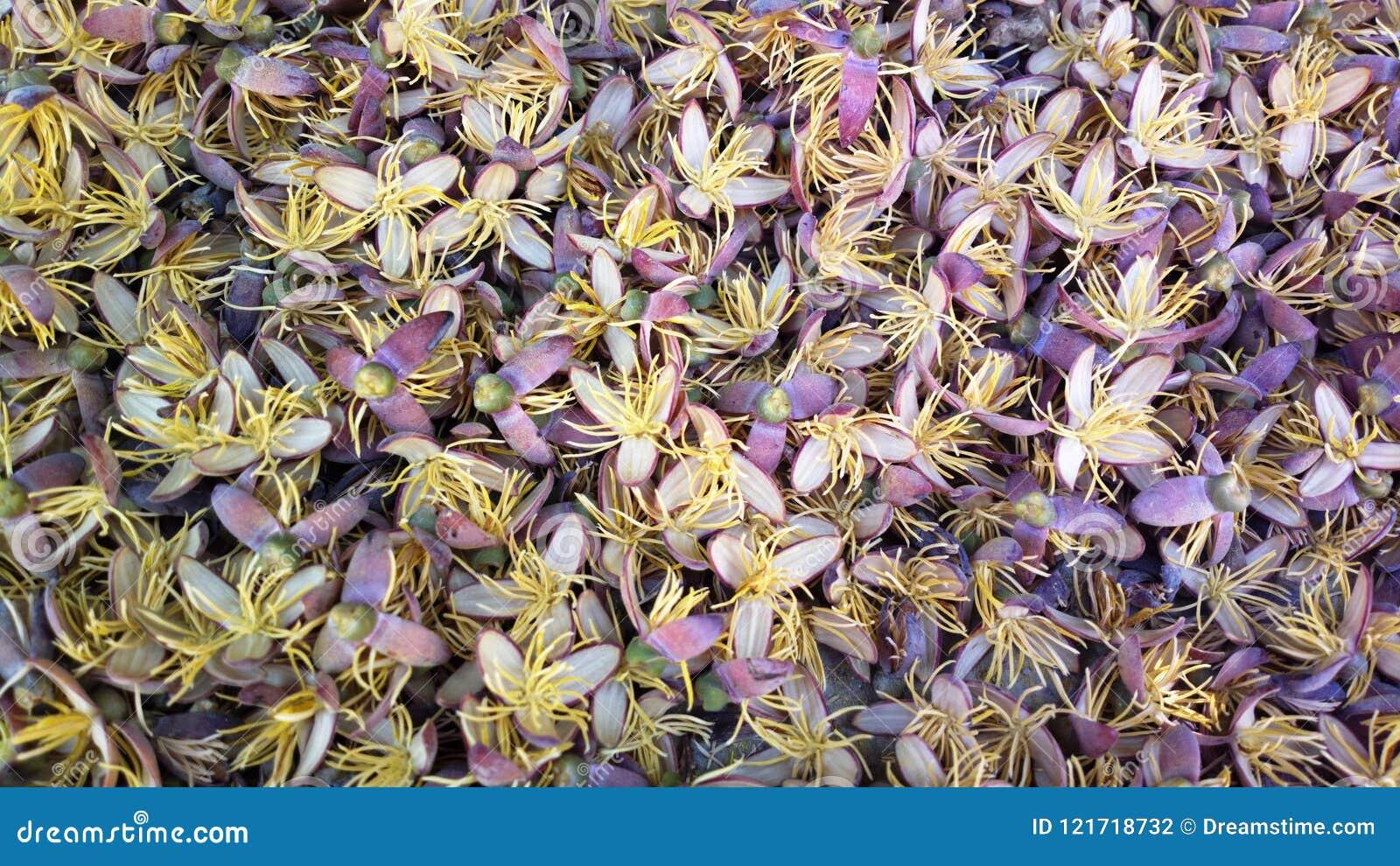 Egyptian Palm Flowers spread on floor