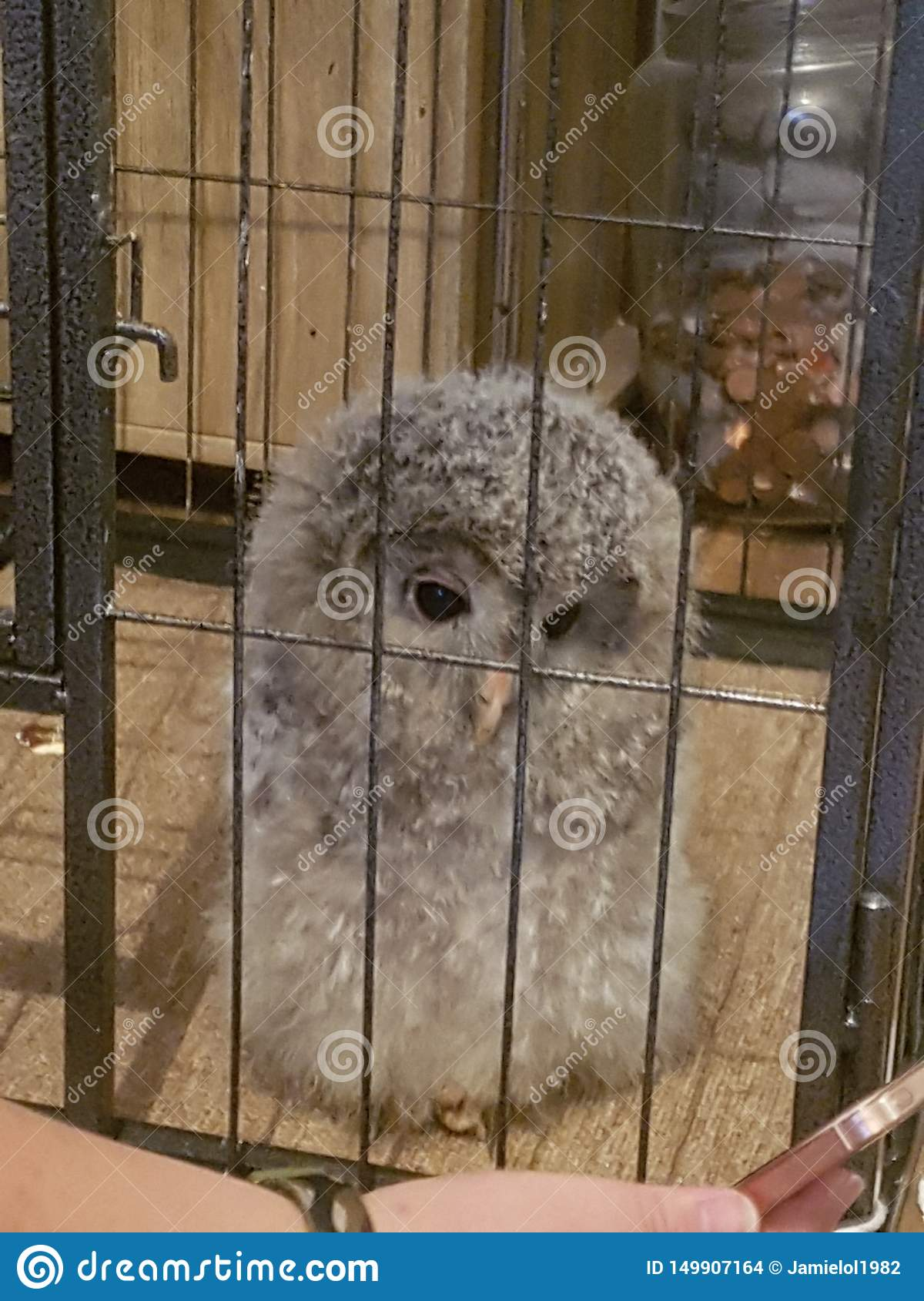 this is my pet ural owl hes so cute n fluffy