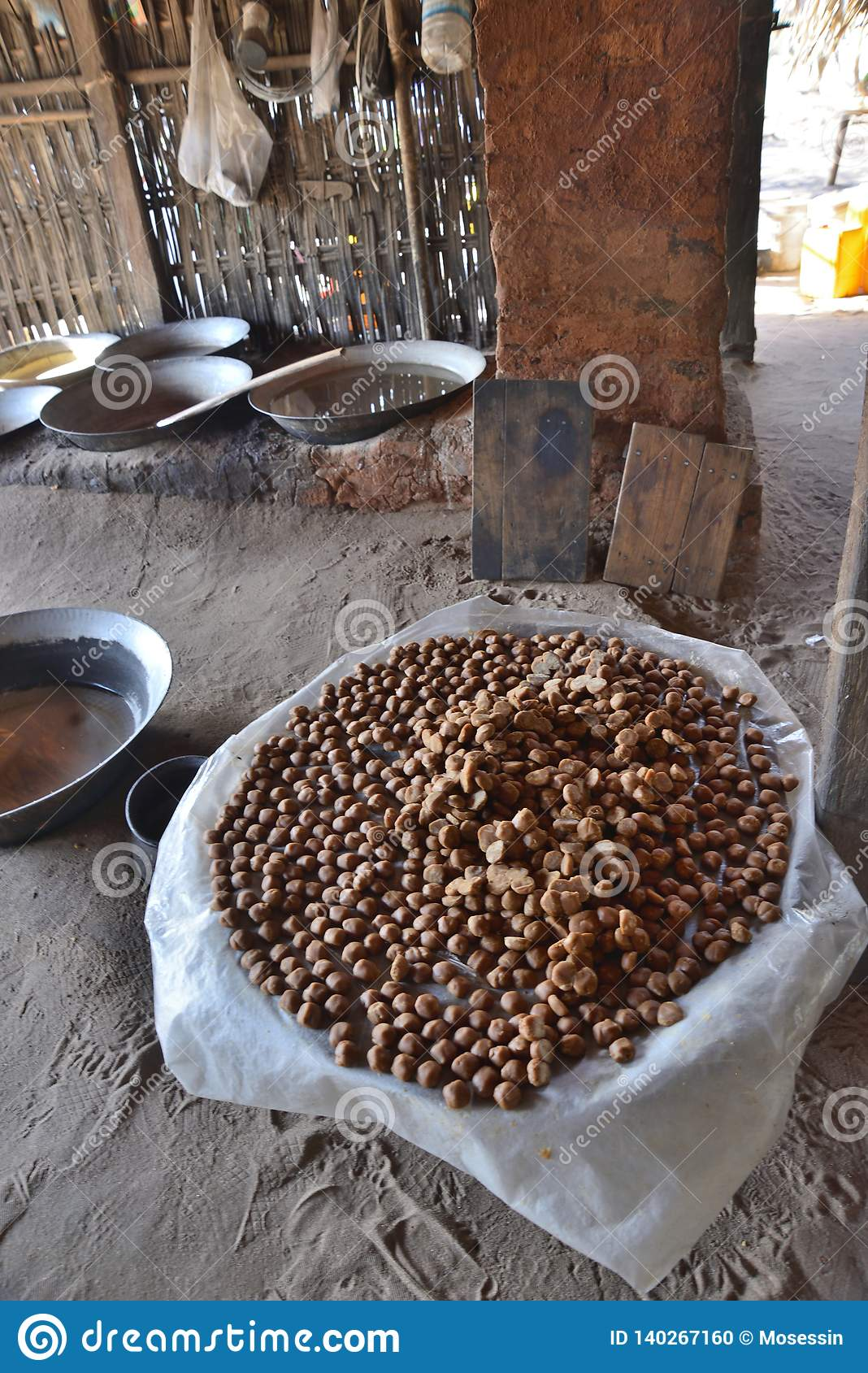 Myanmar Coconut Palm Tree Nuts Stock Photo - Image of ...