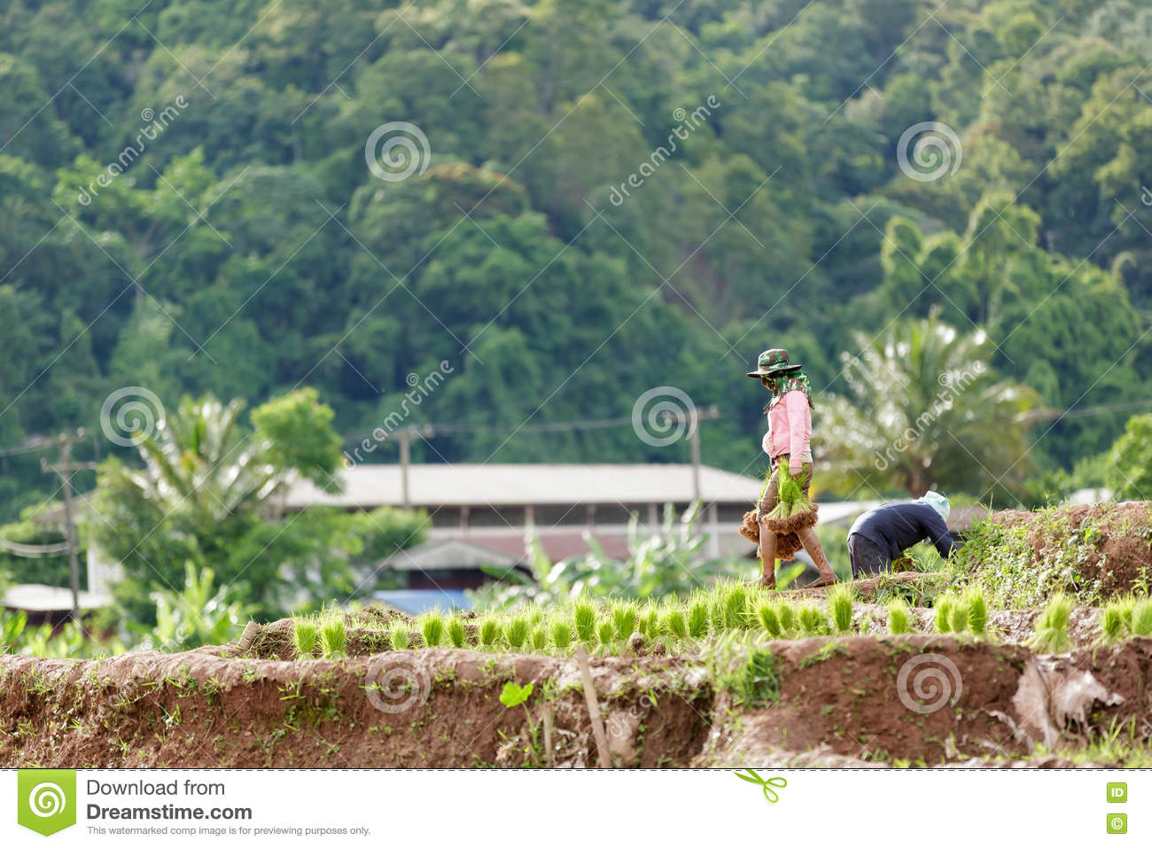 Tak Thailand  city photos : Maesot Tak Thailand June 25 2016 Myanmar farme.