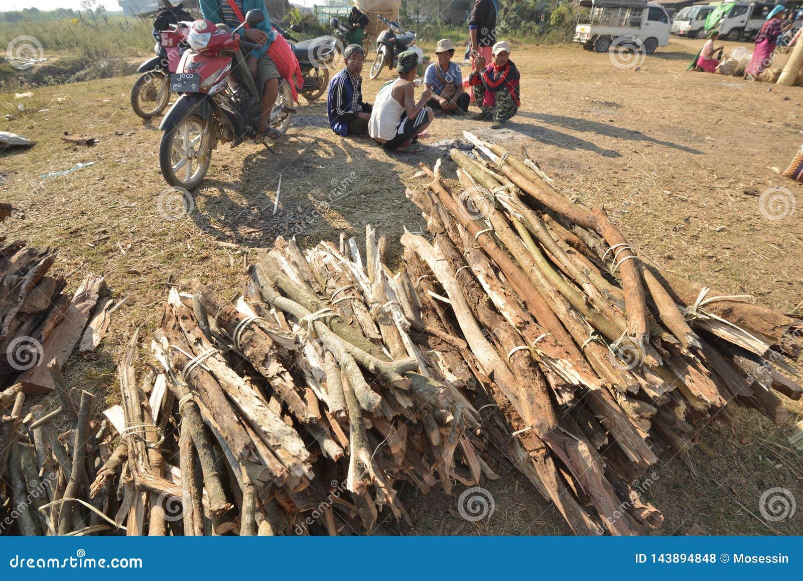 Myanmar Bagan wood tree inventory market