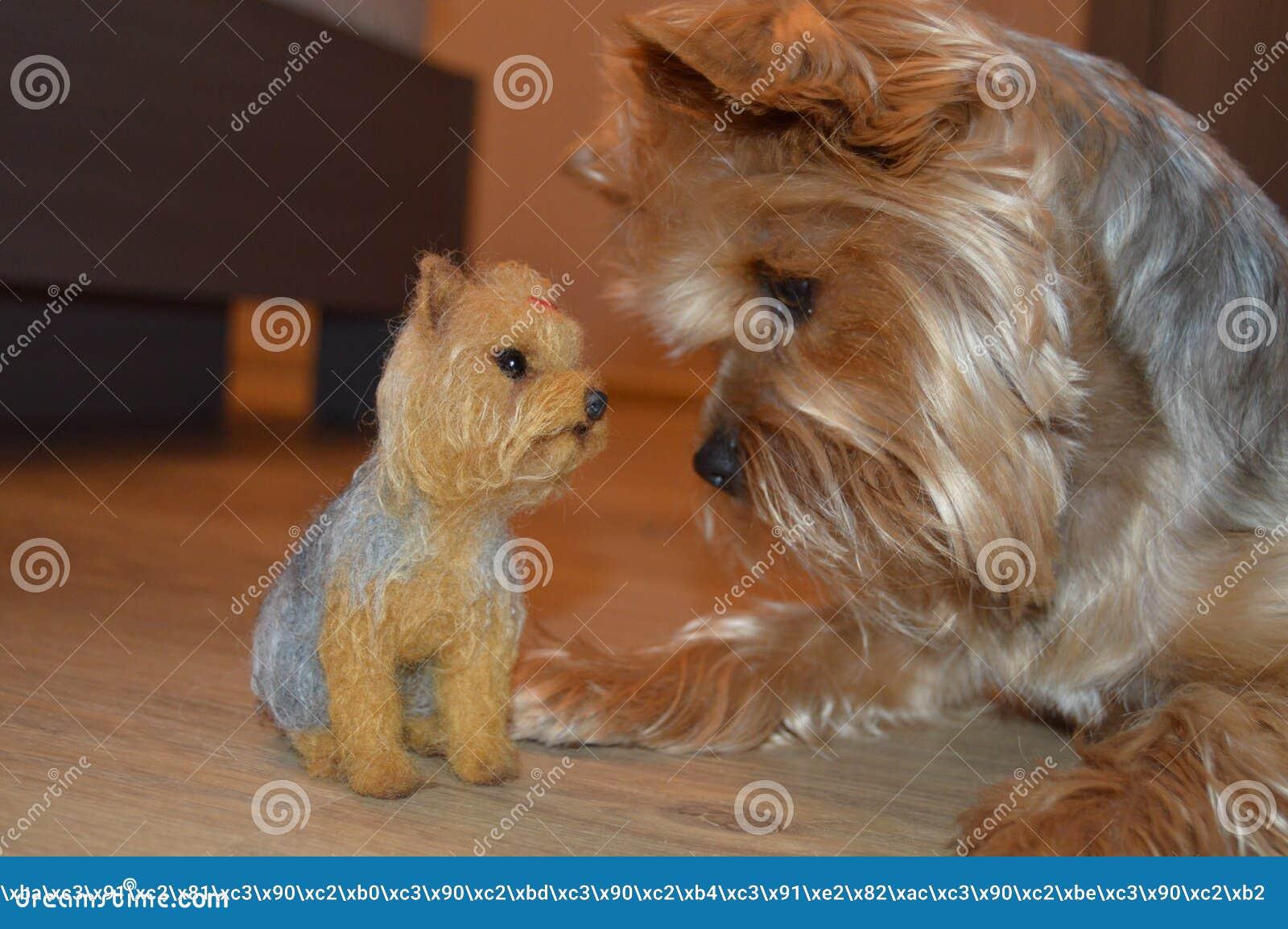 Mycket härligt foto av en verklig hund och hennes docka