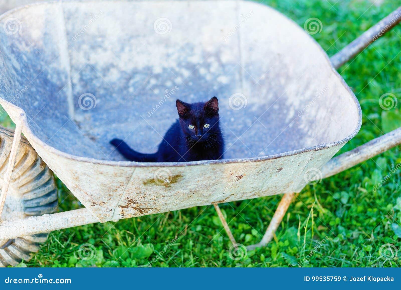 Mycket liten svart pott som spelar med den trädgårds- skottkärran