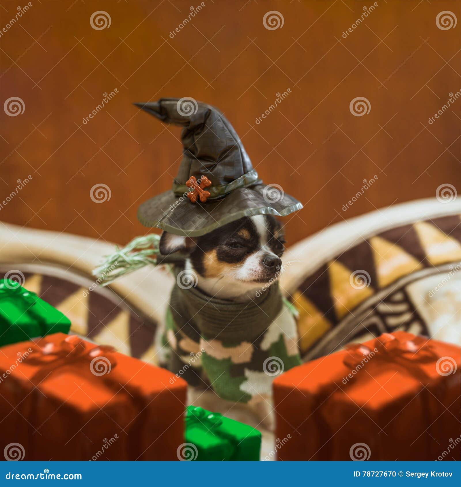 Mycket liten valp som sitter bära SAD en häxas hatt- och gåvaaskar runt om honom halloween lycklig vykort