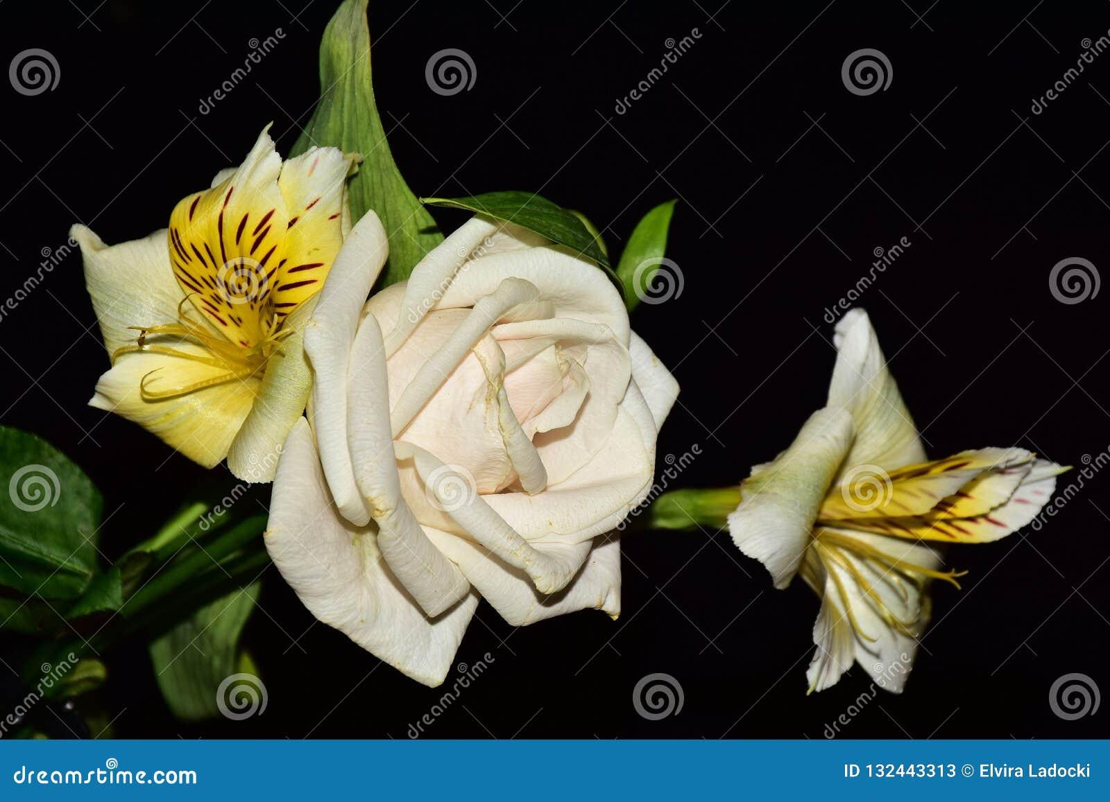 Mycket nätta flerfärgade blommor stänger sig upp