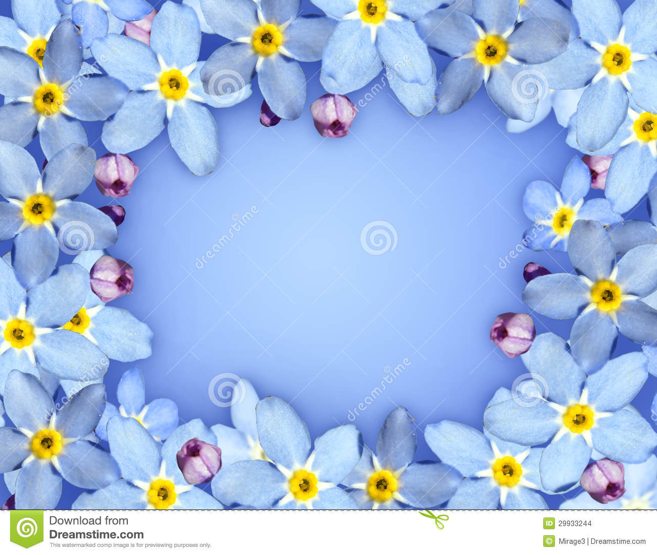 Blue Flower Frame Stock Photo Image Of Floral Nature