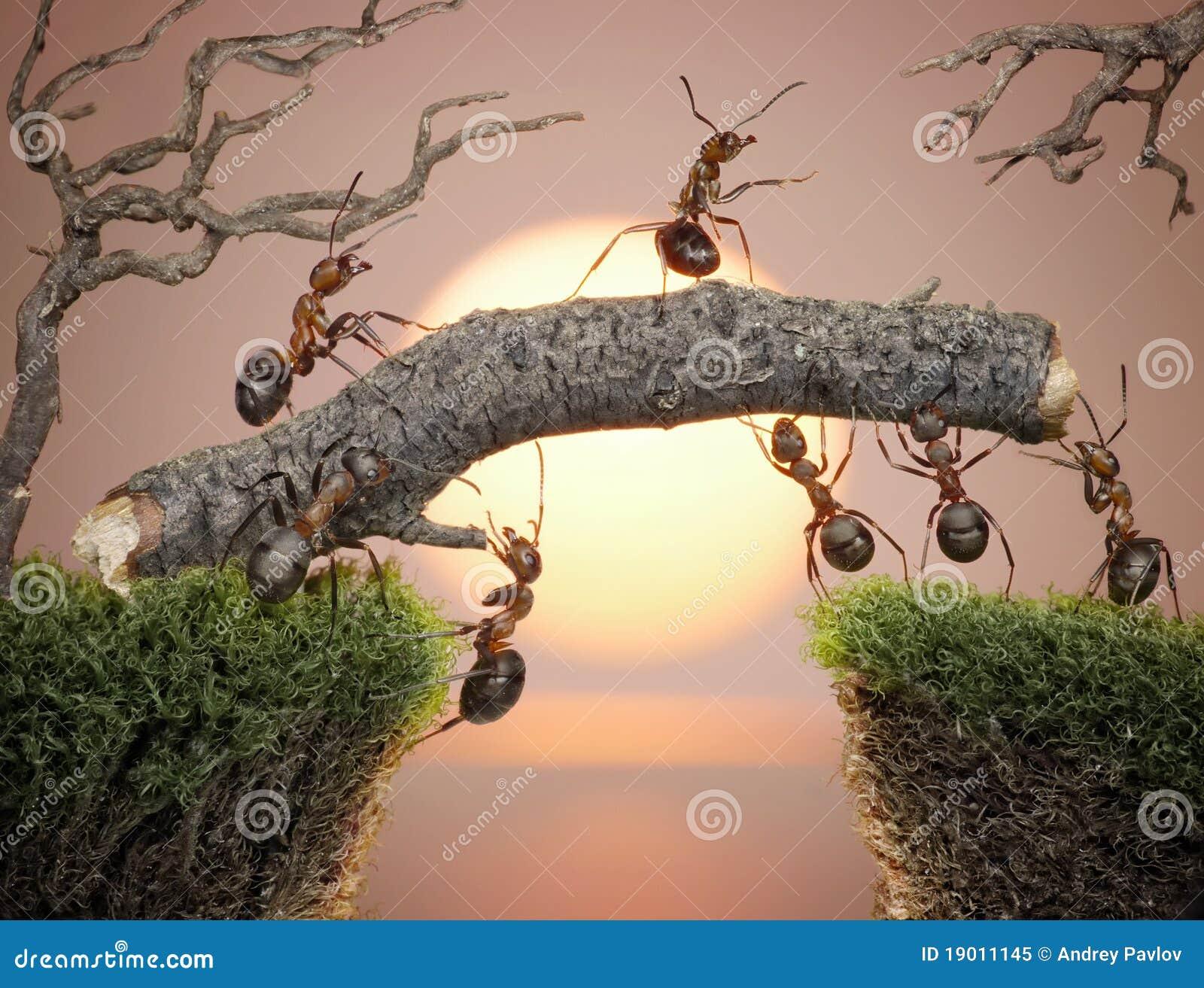 Myror bridge konstruering av lagteamwork