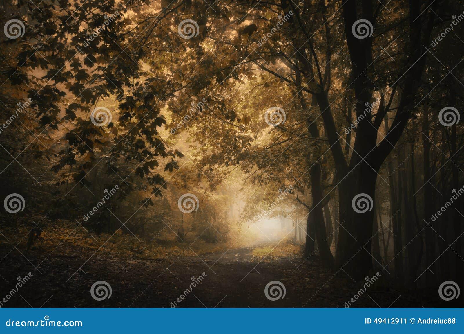 Download Mysteriöser Wald Der Wegabflussrinne Im Herbst Stockbild - Bild von abenteuer, stimmung: 49412911
