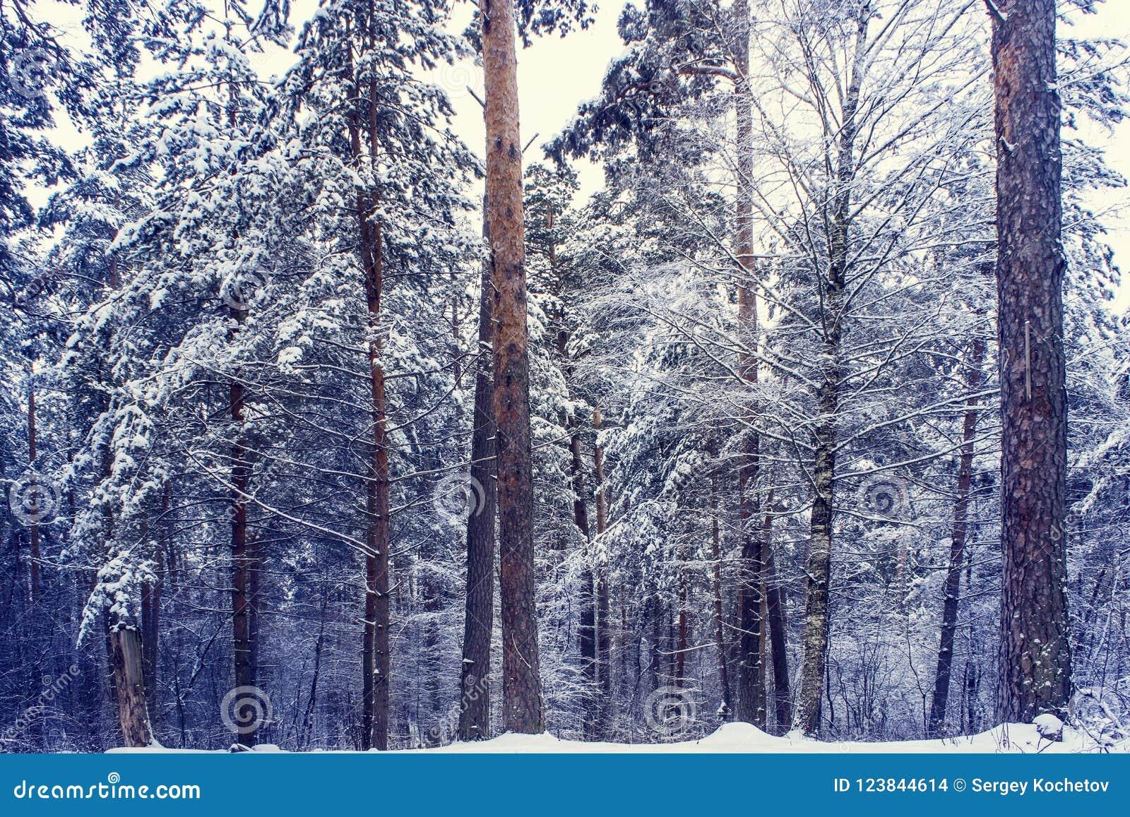 Mysteriöser Winterwald im dunkelblauen farbigen Wald