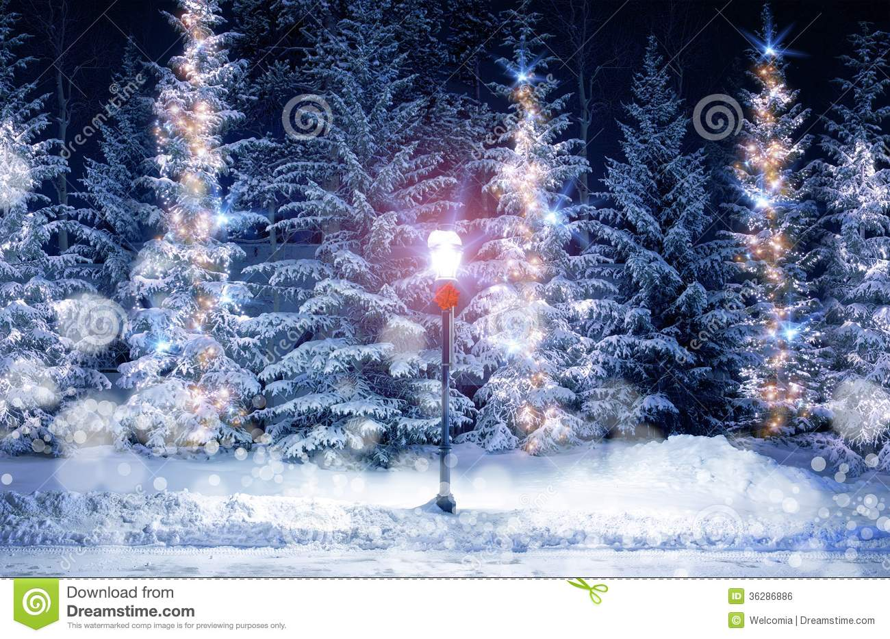 Mysterious Christmas Alley Royalty Free Stock Image