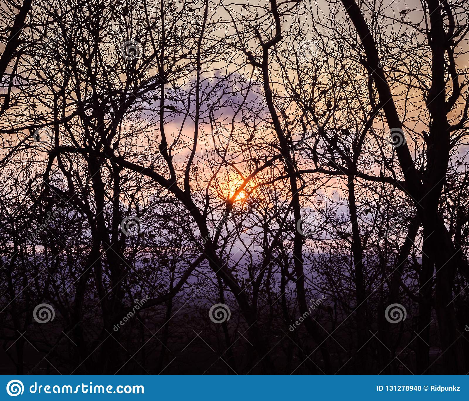 Tousands of branches from dead forest at dawn