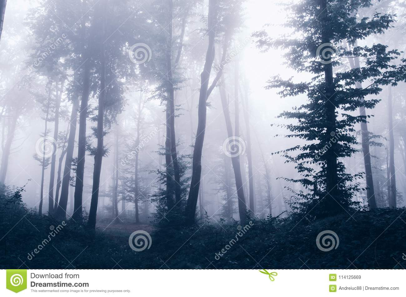 mysterious fantasy forest with fog stock image image of dark