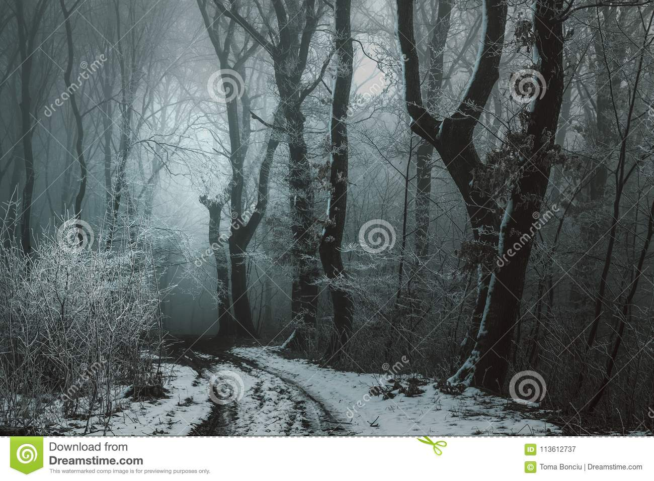 Frozen Foggy Forest Dark And Creepy Road Stock Image