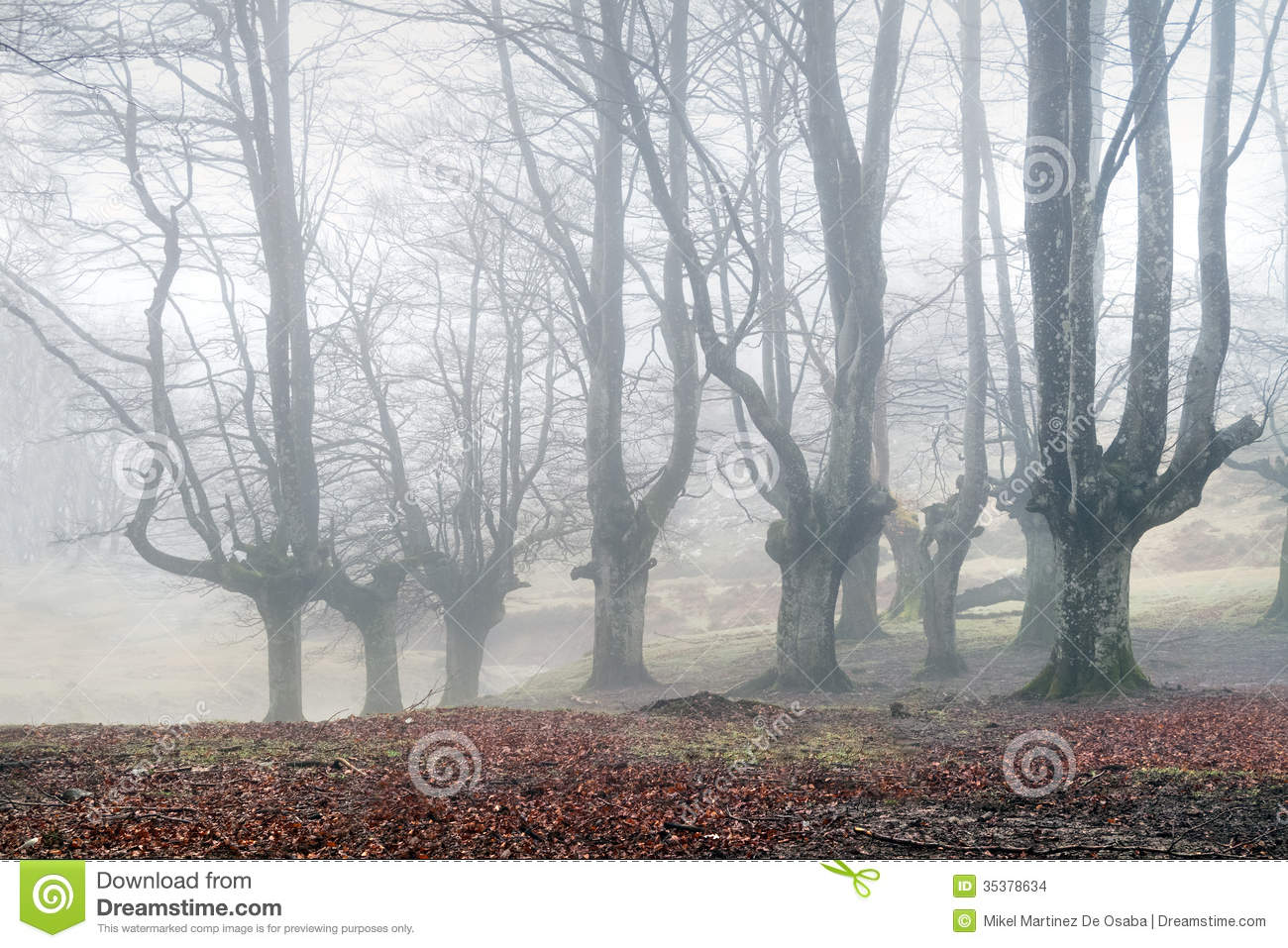 mysterious forest in winter - photo #12