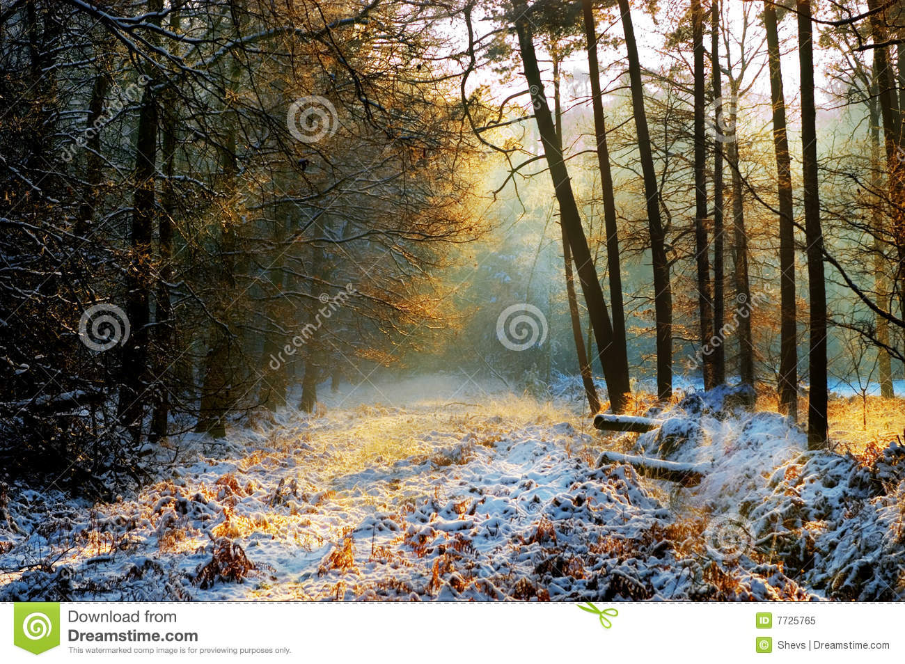 mysterious forest in winter - photo #3