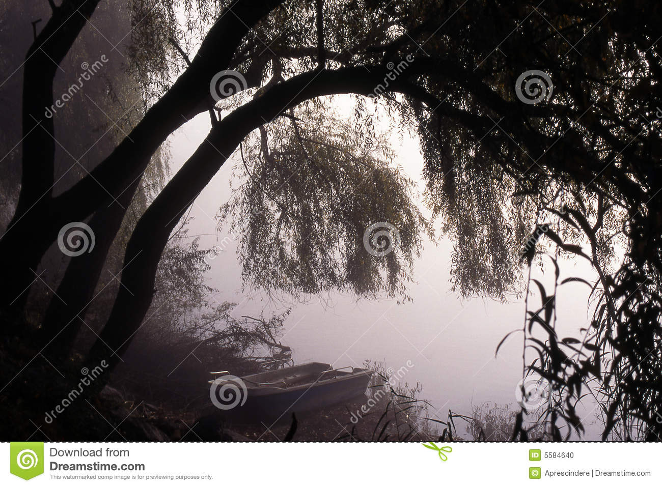 Mysterious Forest Lake Stock Photo, Picture And Royalty Free Image ...