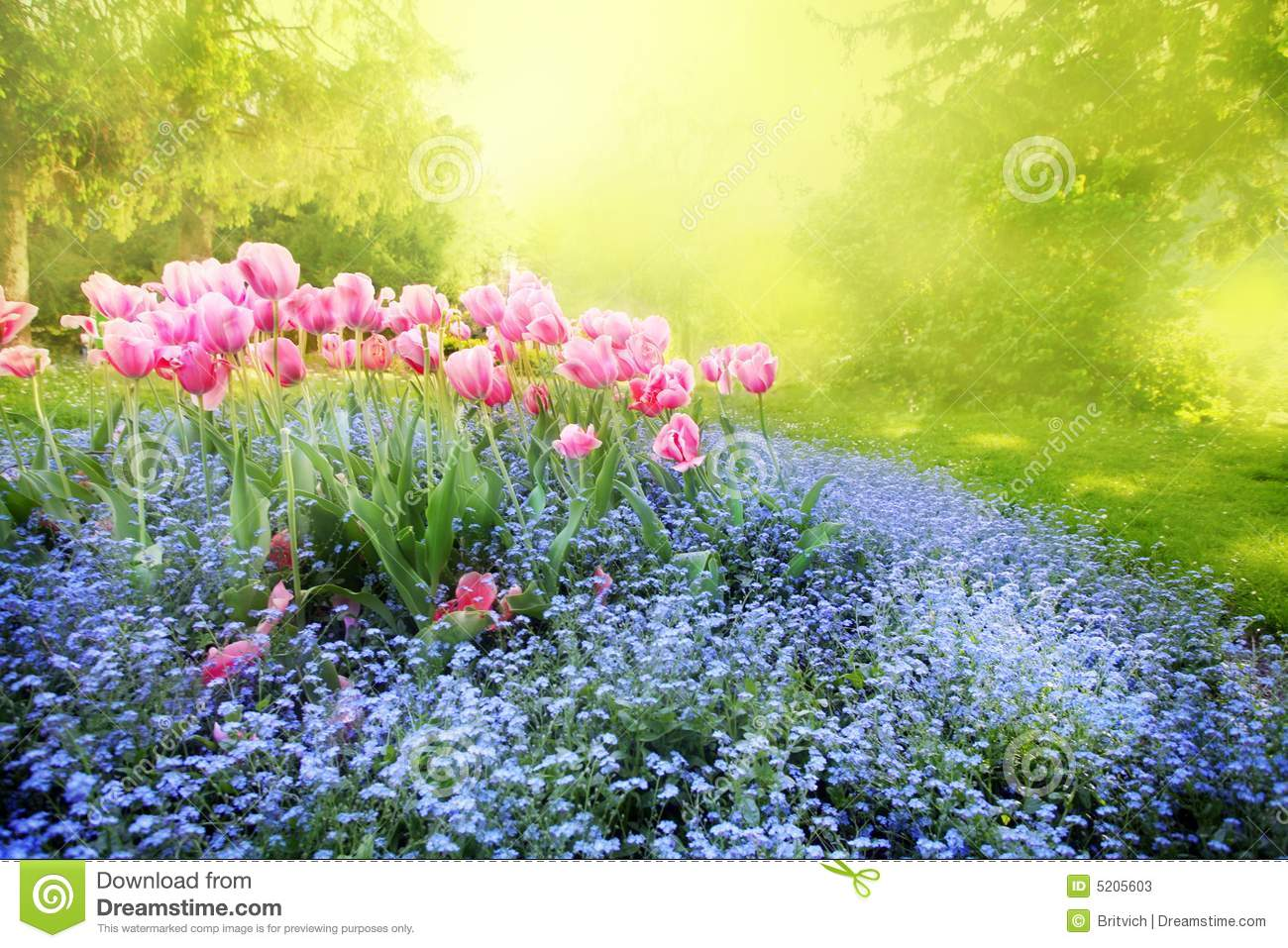 Spring sunny mysterious garden with tender flower-bed.