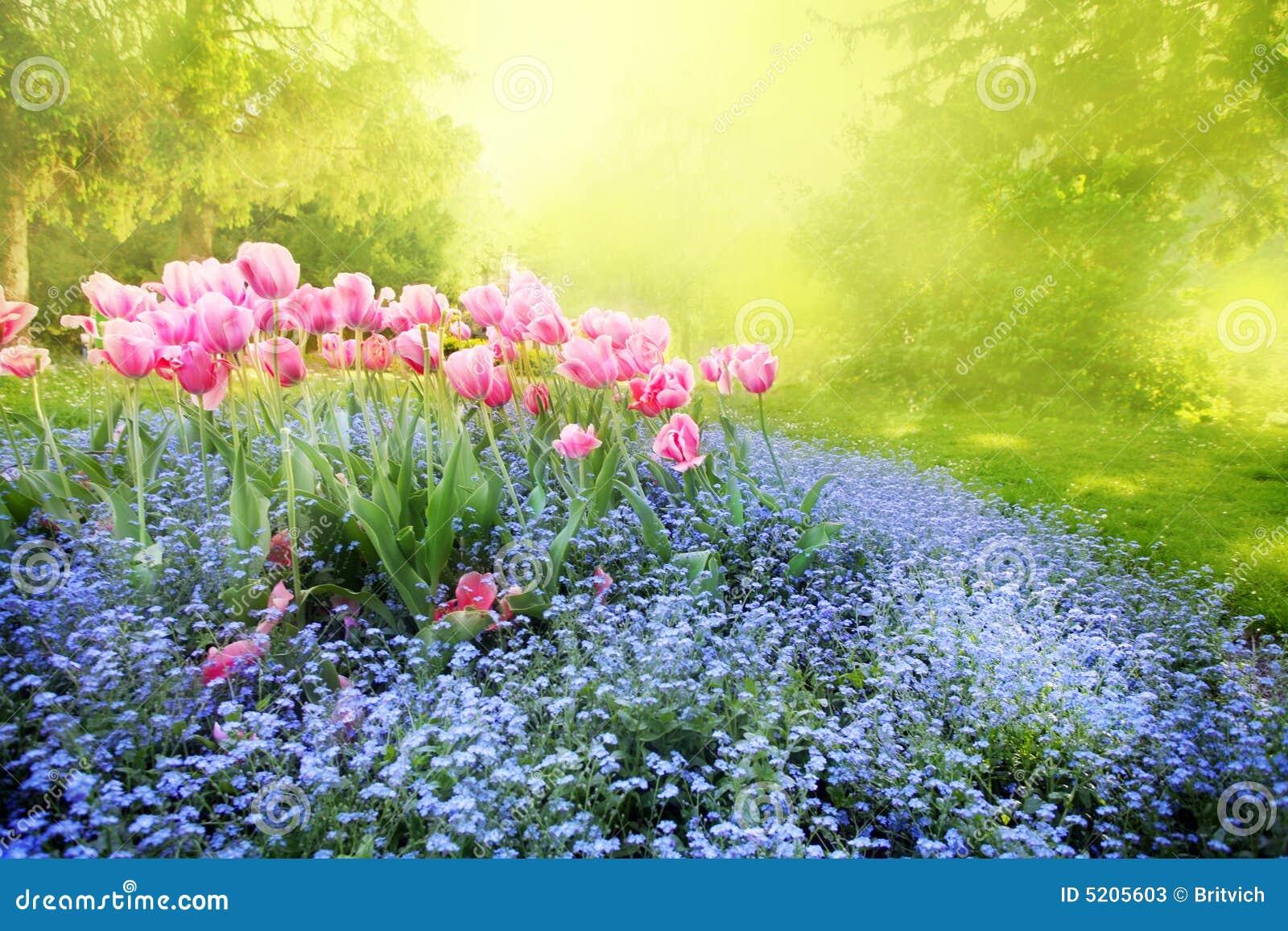 Mysterious Sunny Garden Stock Photos Image 5205603