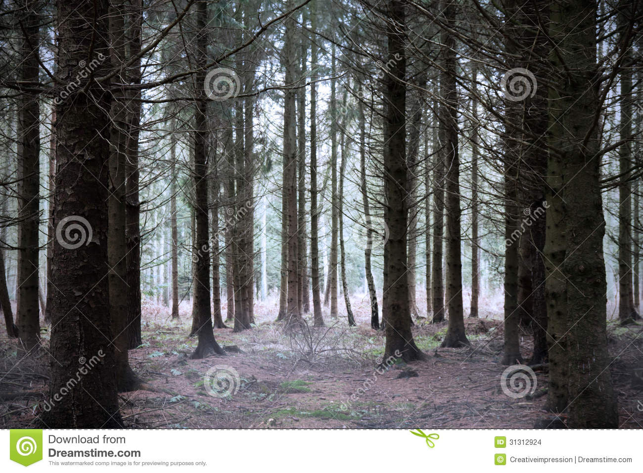 mysterious forest in winter - photo #24