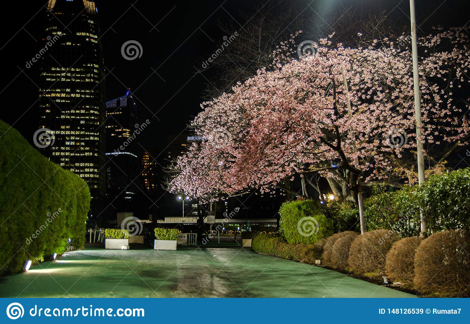 Mystery garden with Cherry Blossoms at night in Tokyo