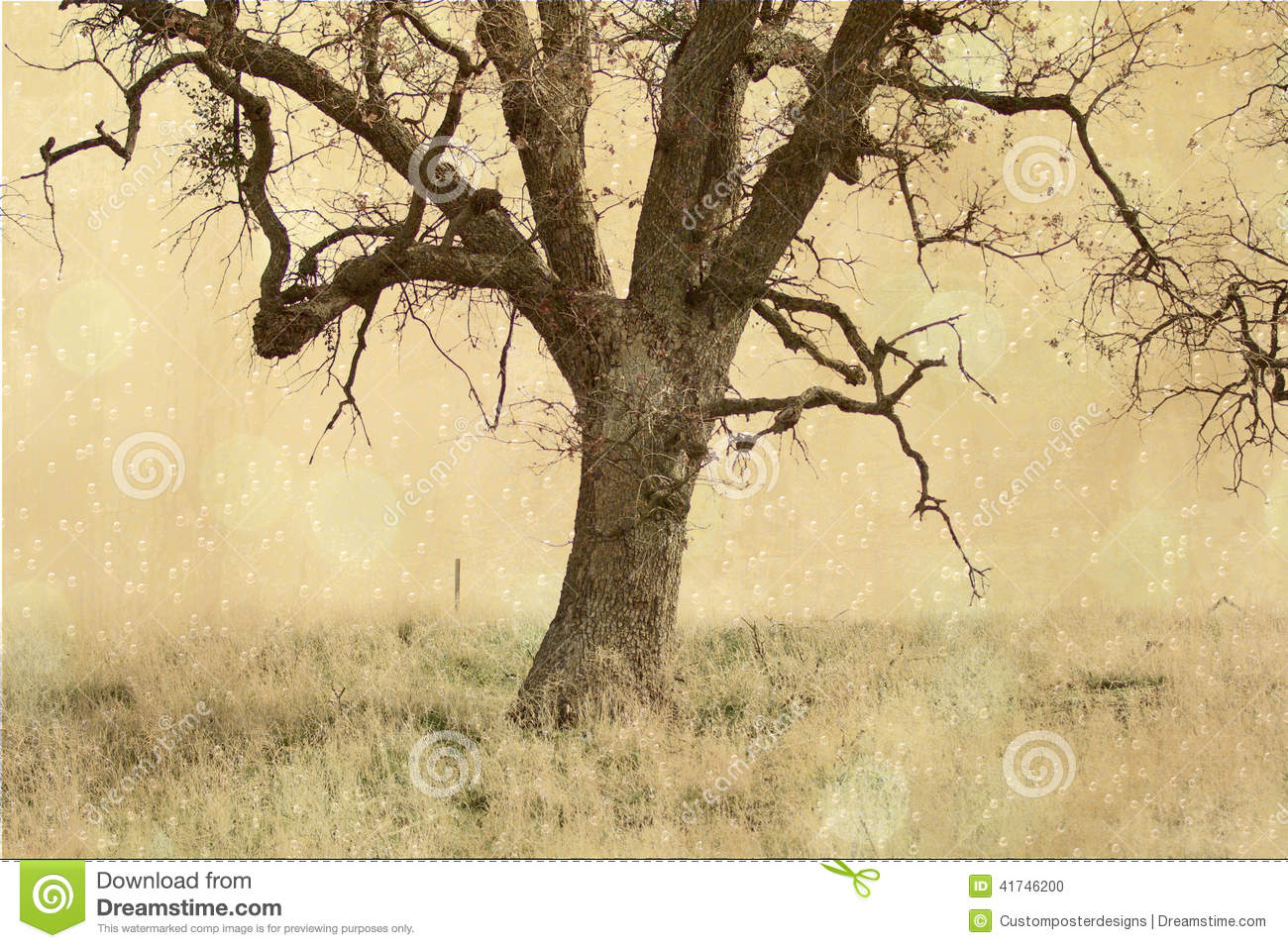 Download The mystery tree. stock photo. Image of background, bubbles - 41746200