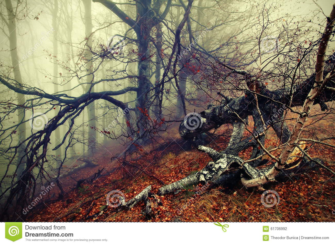 Autumn landscape and fog. Colored mystic forest. Autumn background