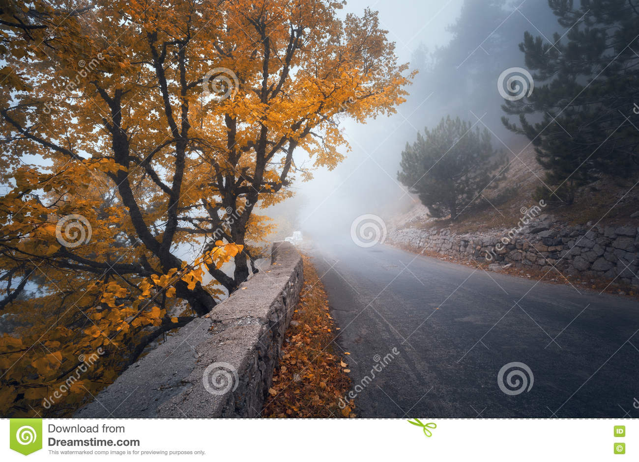 Mystical autumn foggy forest with road. Fall misty woods