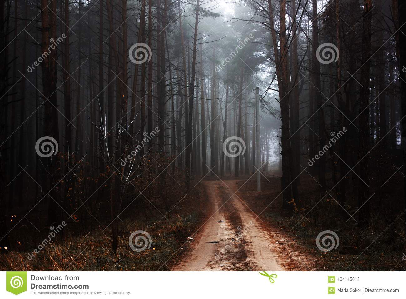 Morning Mystical autumn red forest with road in fog. Fall misty woods. Colorful landscape with trees rural road orange and red lea