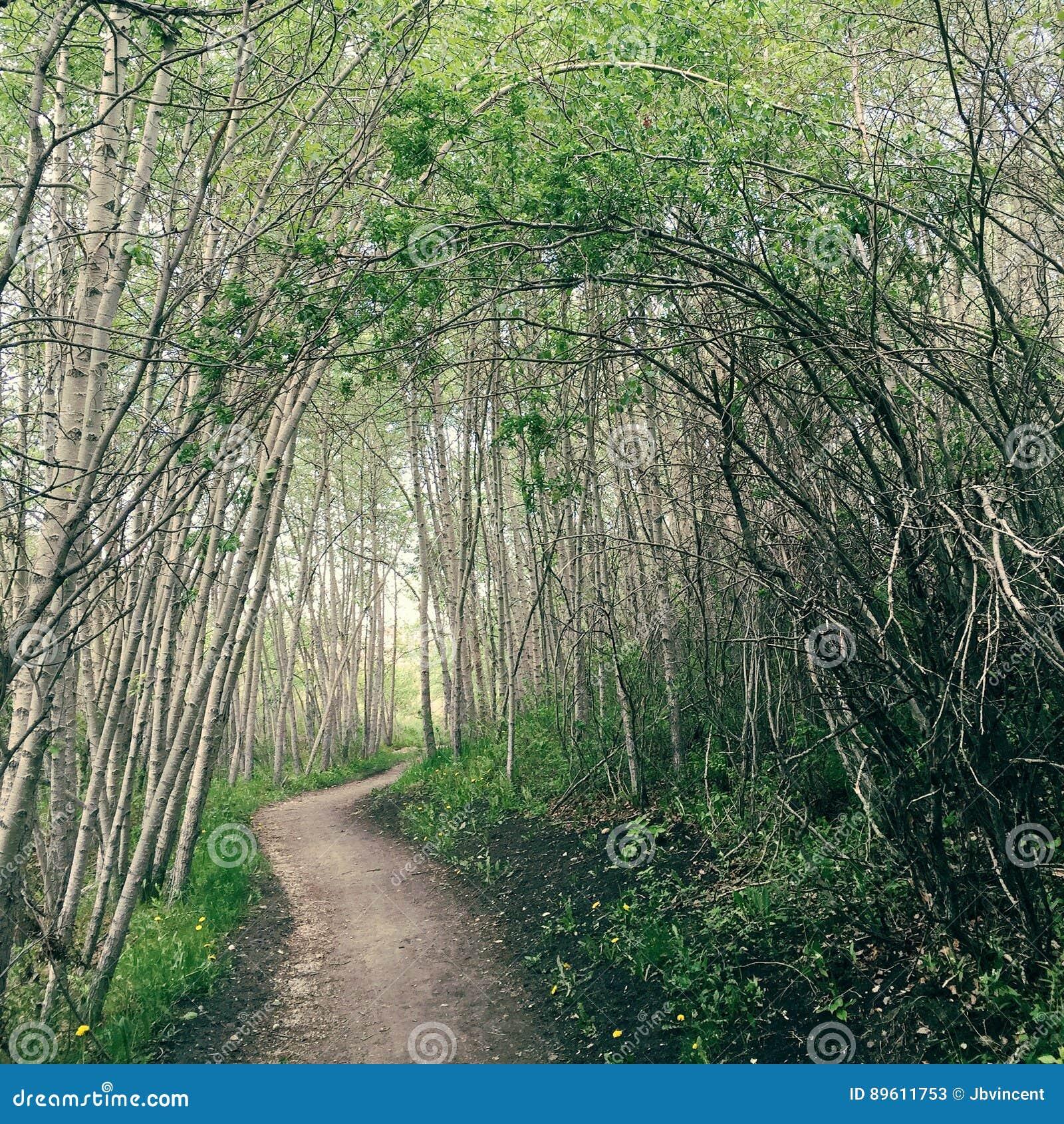 Mystical forest trail